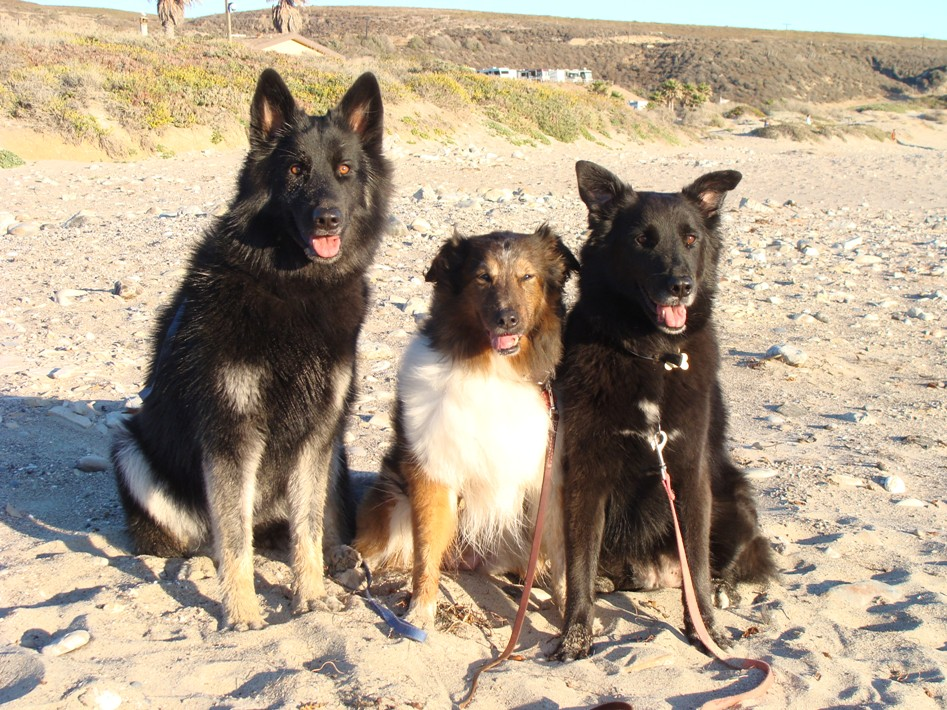 Kaylar, Cassie and Keiko at the beach